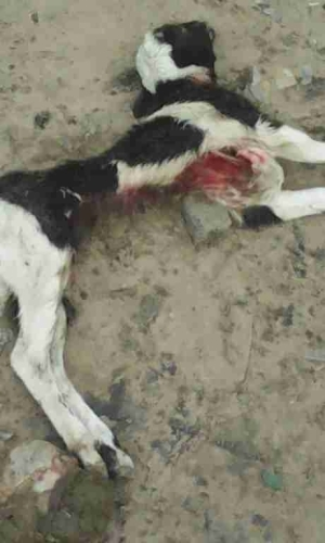 Panic As Mysterious Beast Kills Animals In Delta State Community (Graphic Photos)